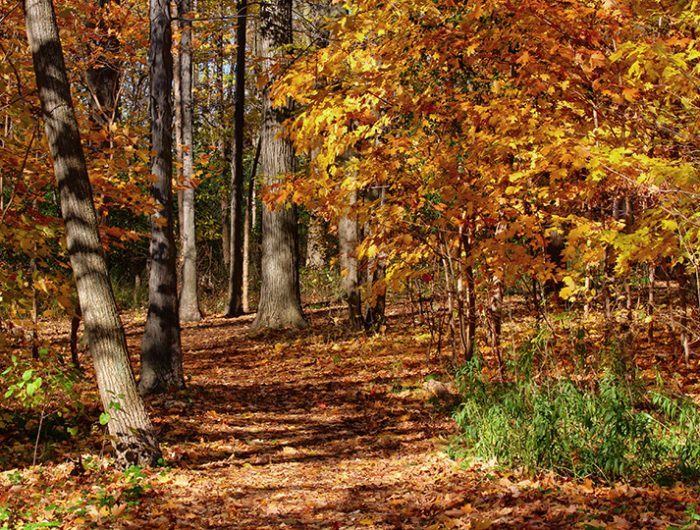 Etobicoke Centennial Park