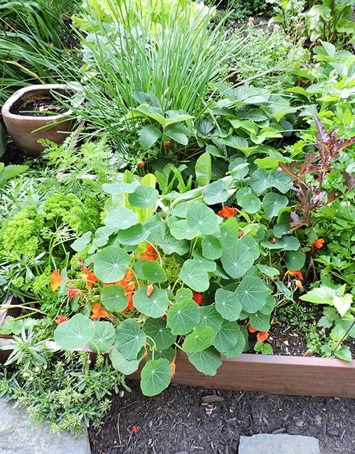 Sustainability Community Gardens 2