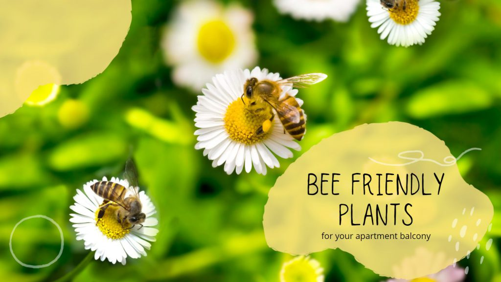 5 Bee-Friendly Plants for Apartment Balcony Vancouver