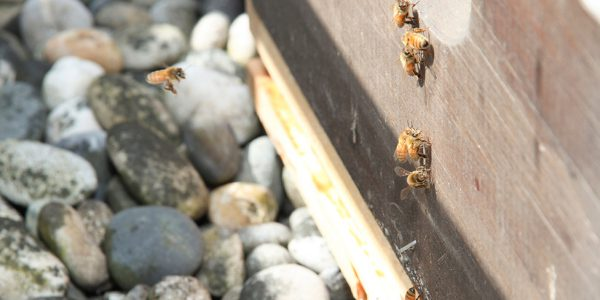 Hollyburn Bees at Emerald Terrace Apartments Downtown Vancouver