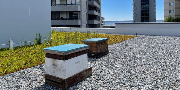 Hollyburn Beehives at Hollyburn Gardens Apartments West Vancouver