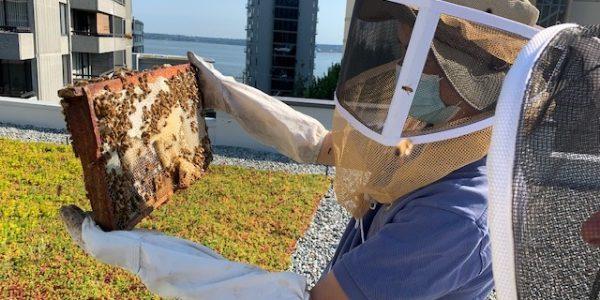 Hollyburn Gardens Apartment Beekeeping in West Vancouver