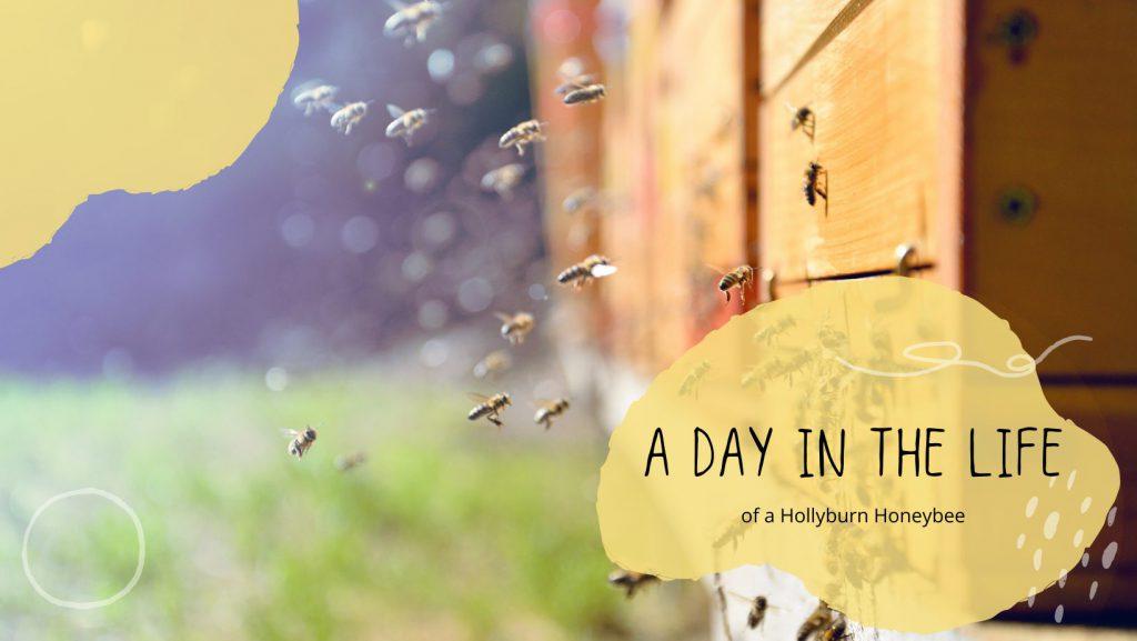 Hollyburn Apartment Rental Beekeeping Blog