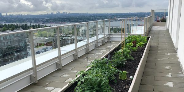 The rooftop community garden at The Lonsdale Rental Apartments in North Vancouver